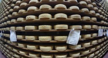 La stagionatura del formaggio Montasio dop
